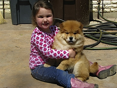 D&M Farm Kennel - Chow breeder in Ohio. Chow puppies for sale in D&M Farm